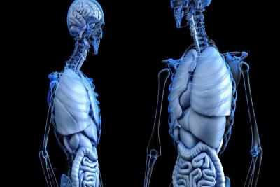 کشف عضو جدید بدن - جاذب مایعات